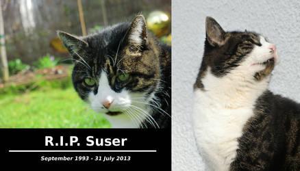 A Cat Named Sue: End of an Era