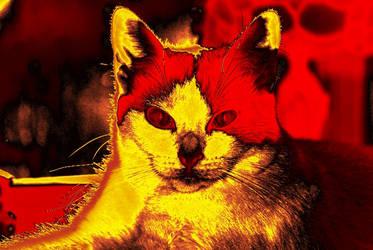 Fire Cat by larryonlinux