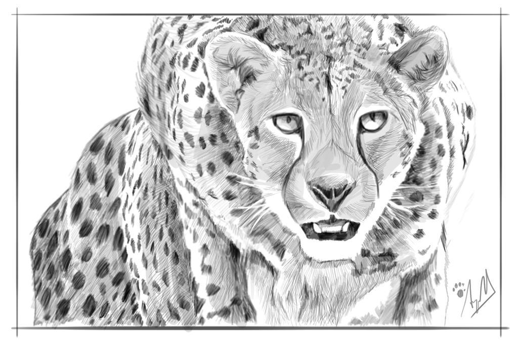 Cheetah Pencil Drawing