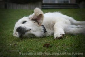 Lazing On A Sunday Afternoon by VelocidadBump