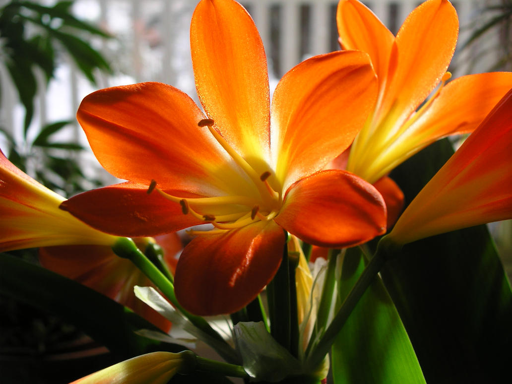 Friendship flowers 001 by lainiexox stock on deviantart - Flowers that mean friendship ...