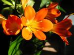Friendship Flowers 010