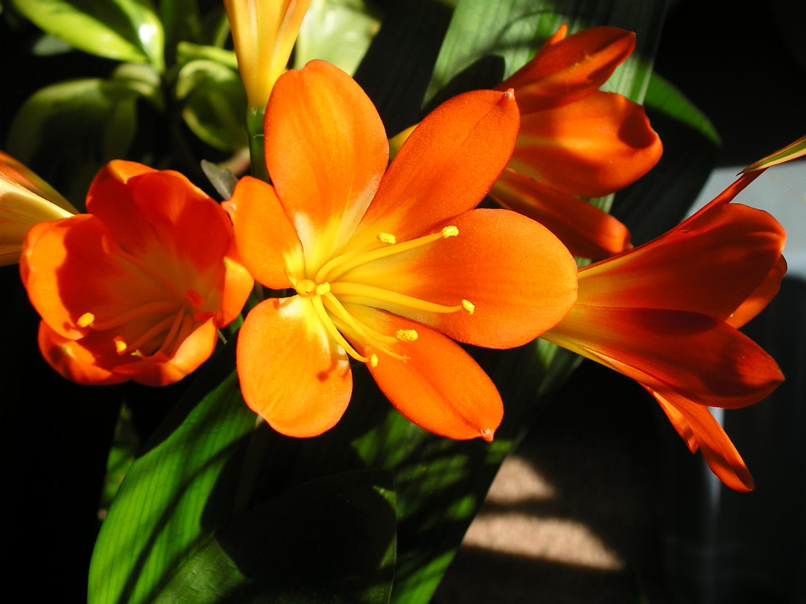 Friendship flowers 010 by lainiexox stock on deviantart - Flowers that mean friendship ...
