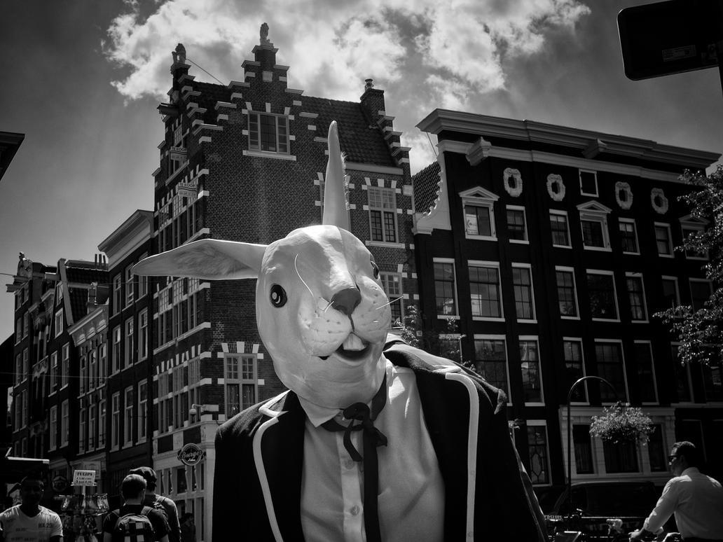 The rabbit of Amsterdam by PatrickMonnier