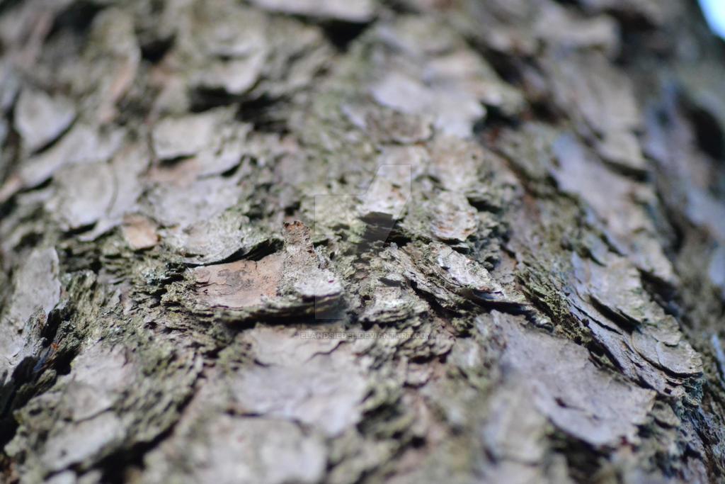 Bark by elandsiedel