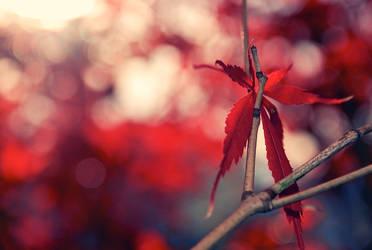Tempered Fall by Renshawboy