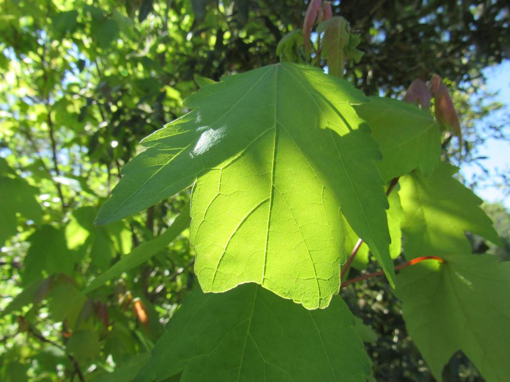 Leaf by JNLDreamer