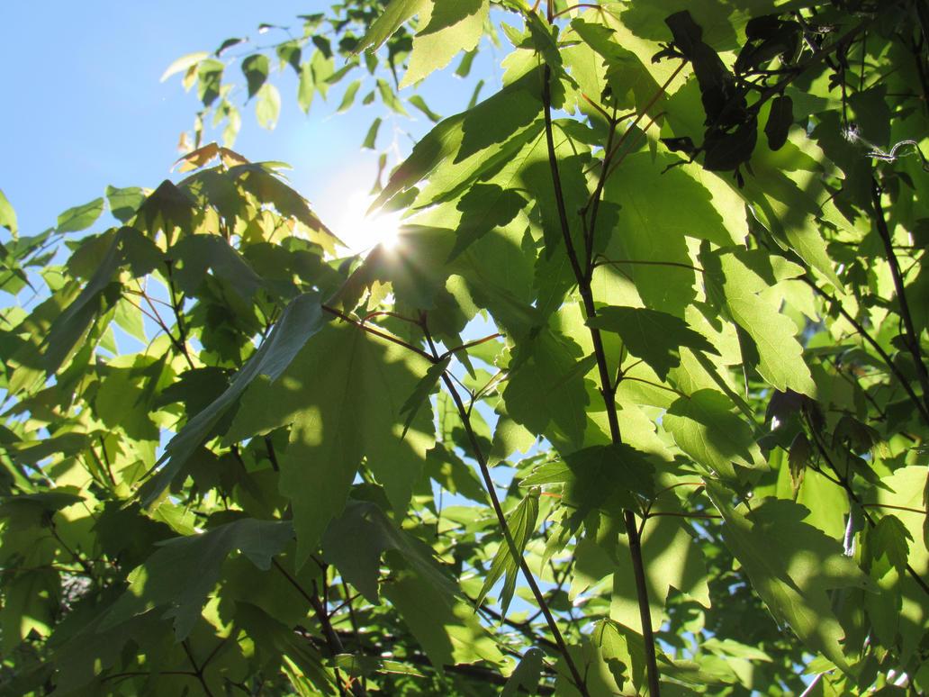 Leaves by JNLDreamer