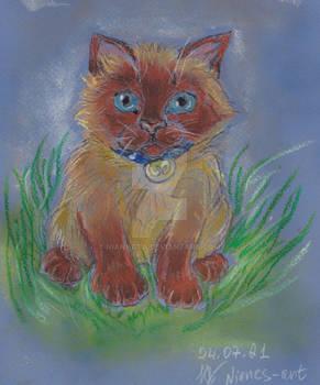Kitten Gav