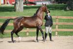 English Horse 21