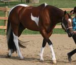 Paint Horse 86
