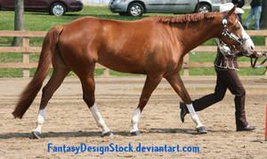 Halter Horse 2