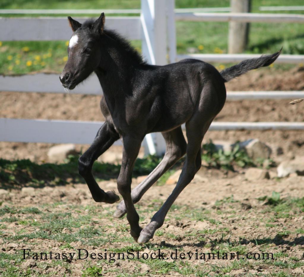 Foal-Carl 35 by FantasyDesignStock