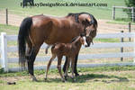 Momma And Foal 8