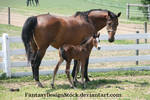 Momma And Foal 9