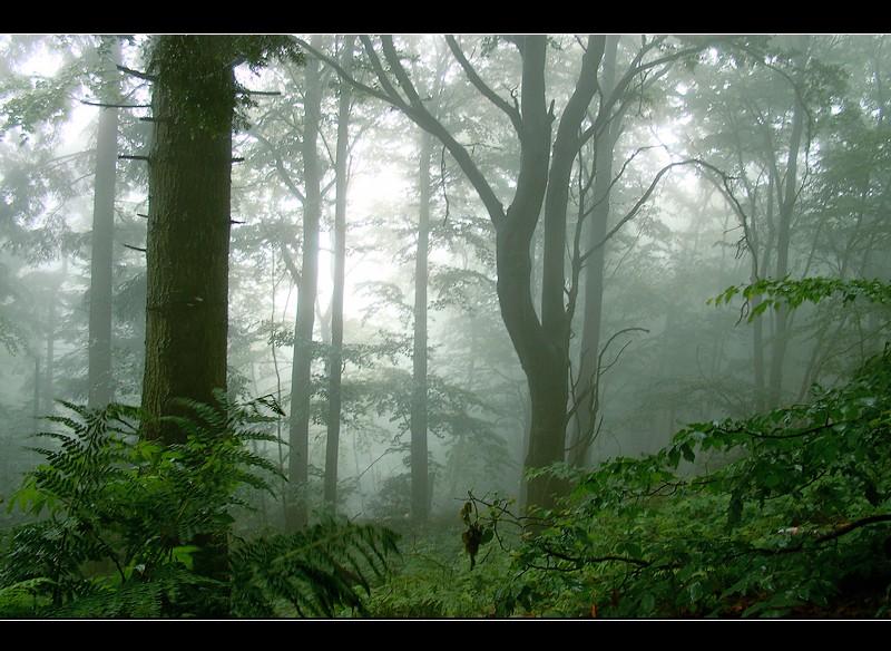 fog by Megson