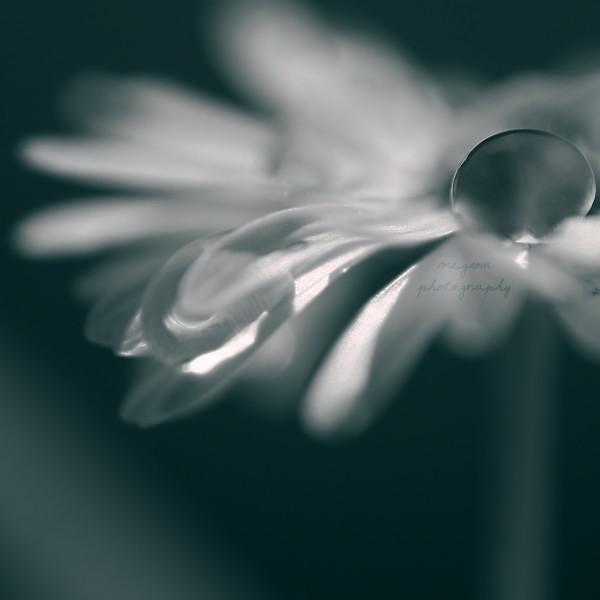 soft by Megson