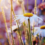 in the sunlight by Megson