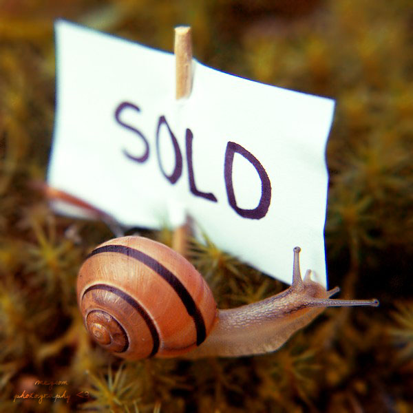 Mr. Snail has got new house by Megson