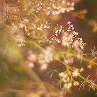 in the sun by Megson