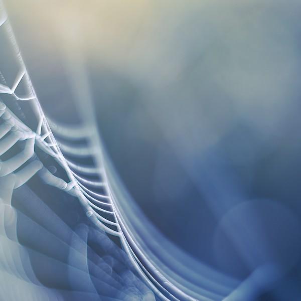 delicate web by Megson