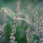 fairytale by Megson