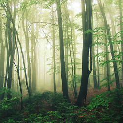 mist by Megson