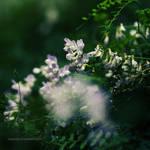 meadow of heaven