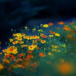 enchanted garden by Megson