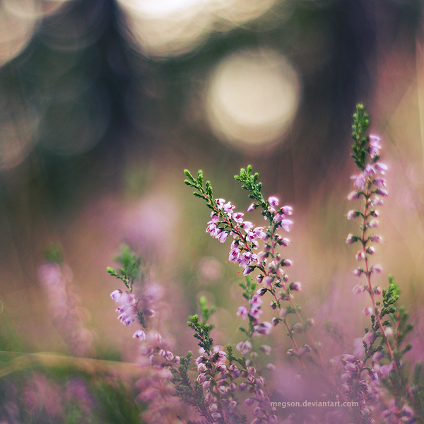 pink field by Megson