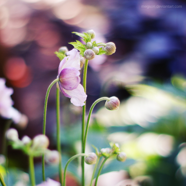 anemone by Megson