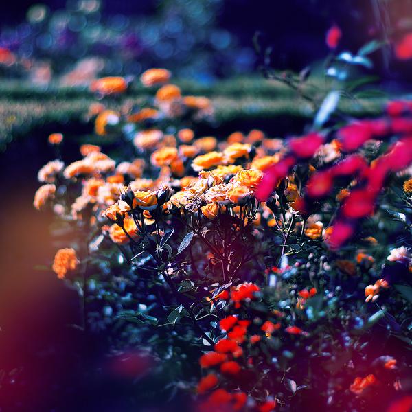 the secret garden by Megson
