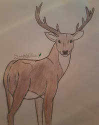 2/10, a deer by Sorrelclaww