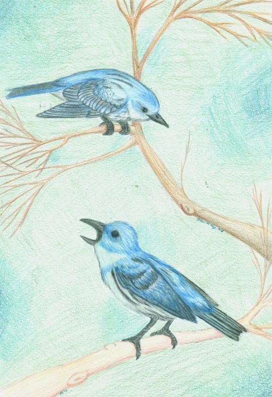 Cerulean Warbler by Tanadrine-Studios
