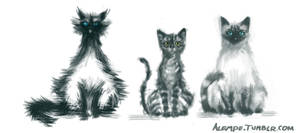 My Cats by alempe