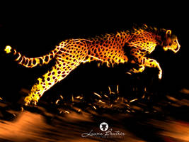 Abstract Cheetah by LuhaBiha