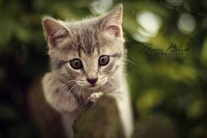 sweet cat by anneyart