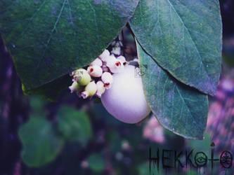 Hidden beauty by Hekkoto
