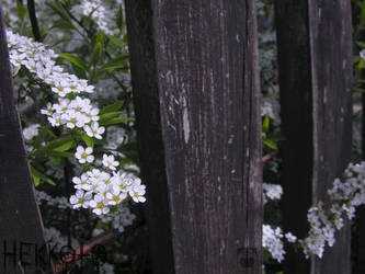 Old Fence3 by Hekkoto