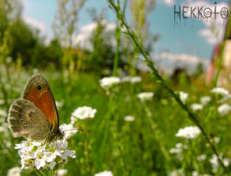 Day Full Of Flowers And Butterflies by Hekkoto