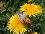 Butterfly closeup by Hekkoto