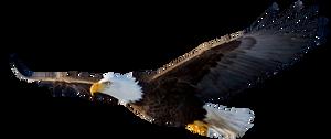 Stock Eagle