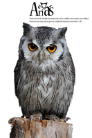Owl Stock by AriaNigthly