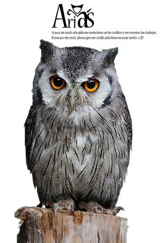 Owl Stock