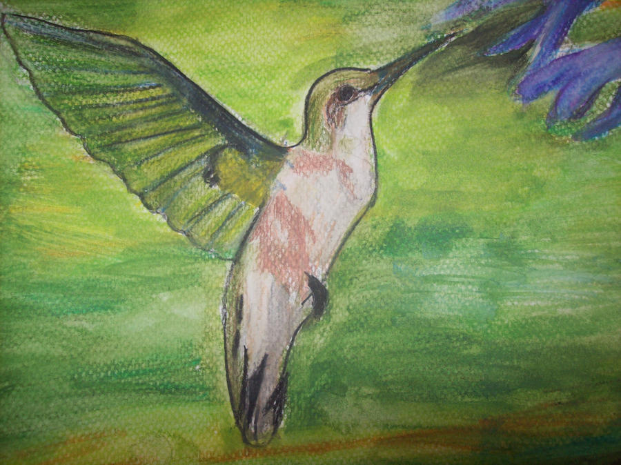 Koliber by Sokoro7