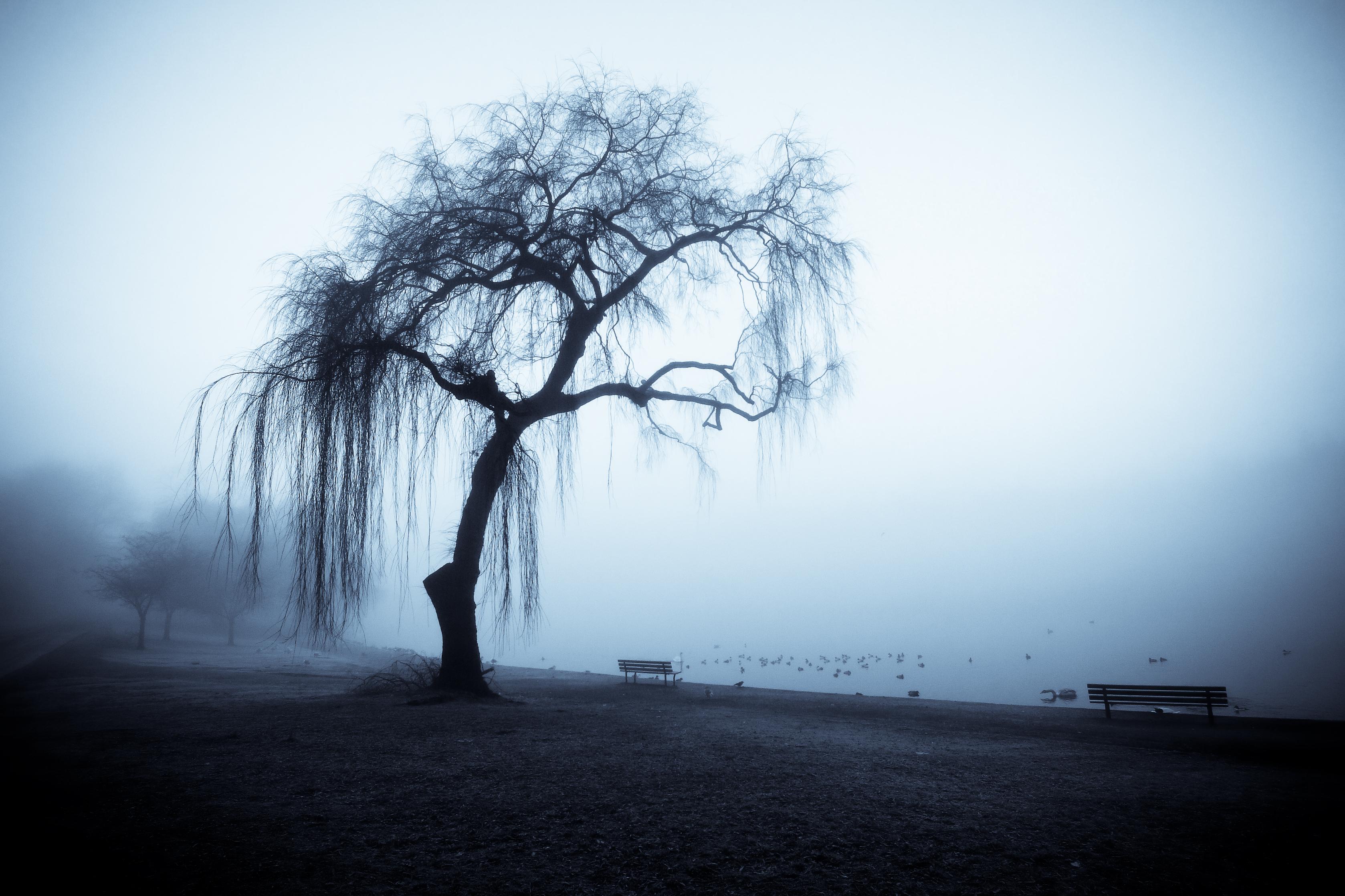 http://fc01.deviantart.net/fs41/f/2009/046/e/8/The_Wise_Old_Tree_II_by_tt83x.jpg
