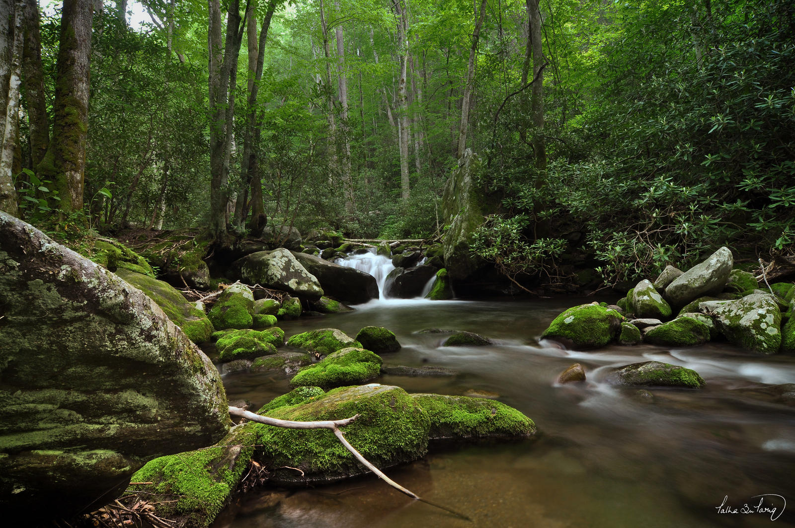 Roaring fork smoky mountains national park by tt83x on for Roaring fork smoky mountains