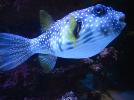 Fishy Fishy Fishy