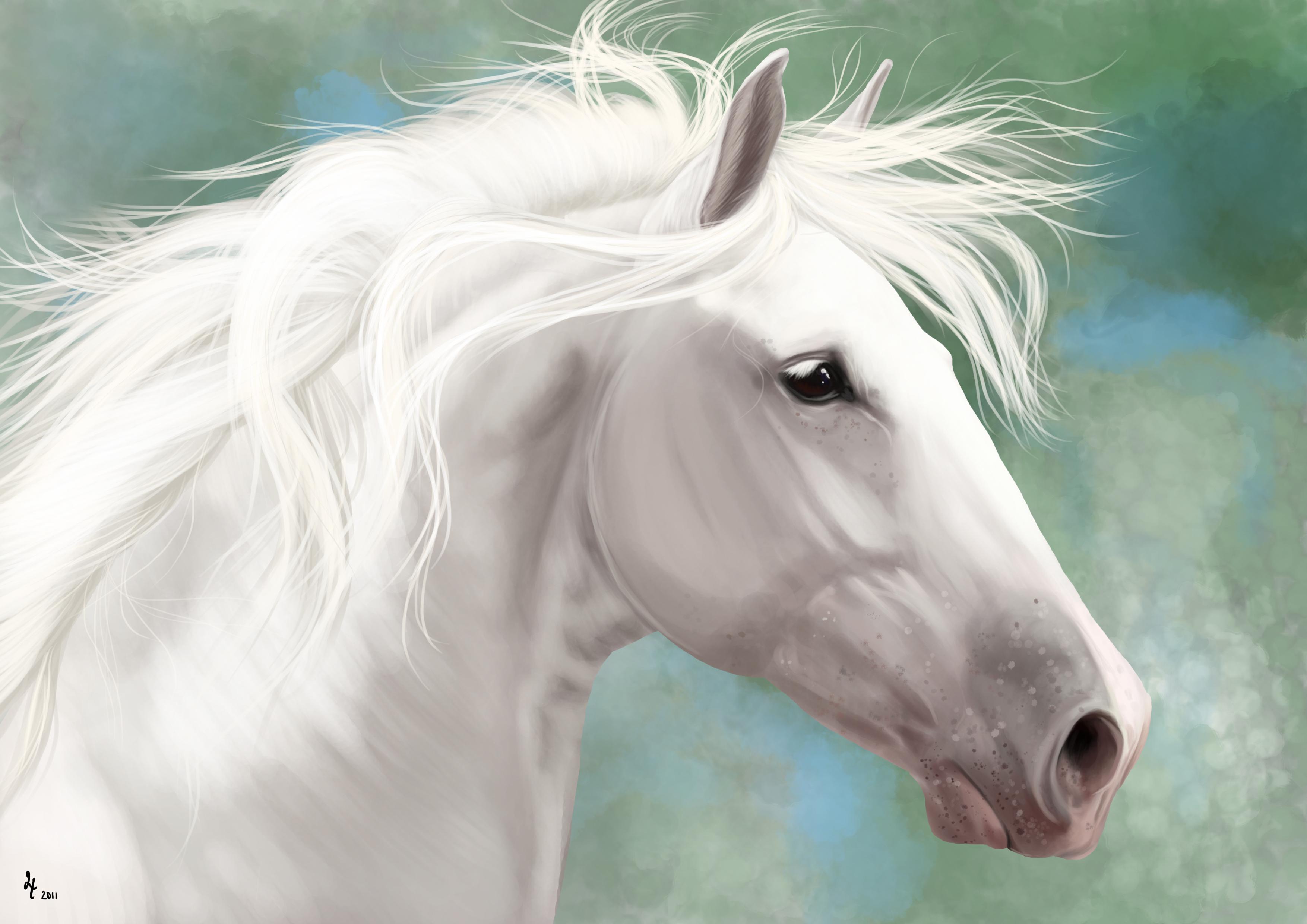 Beautiful White Horse Paintings