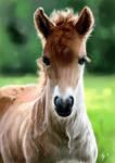 The Horse Kongur